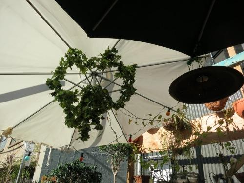 Courtyard 4